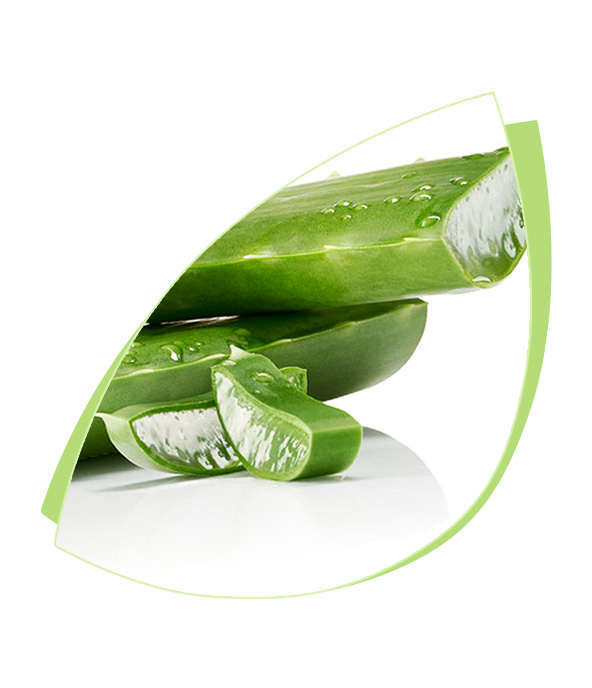 LR ALOE VIA Aloe Vera plant